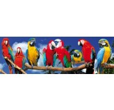 120 piece PANORAMA Jigsaw Puzzle - Parrots