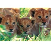 1000pc Play NOW! Jigsaw Puzzle - Lion Cubs