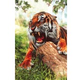 1000pc Play NOW! Jigsaw Puzzle - Siberian Tiger