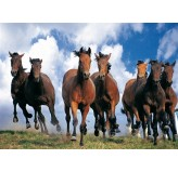 1000pc Play NOW! Jigsaw Puzzle - Horses