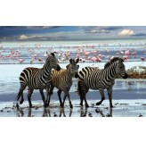1000pc Play NOW! Jigsaw Puzzle - Zebras